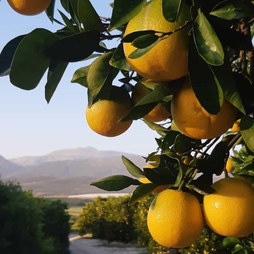 Bergsoom Citrus Farm